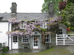 Wistaria Cottage